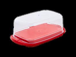 Маслянка (червоний оксамит)