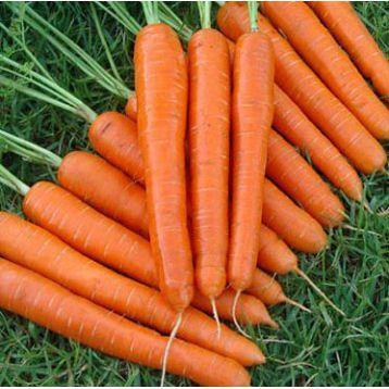 Морковь Ортолано Hortus Италия 3г