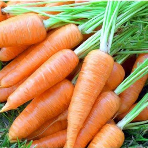 Морковь Шантане Satimex Германия 3г
