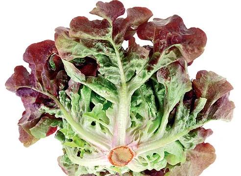Семена салата Дубовый красный Hortus 5г