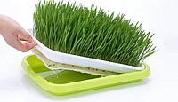 Лоток  для гидропонного выращивания рассады и проращивания семен, фото 1
