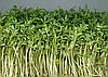 Семена на микрозелень «Кресс-салат» 10 г