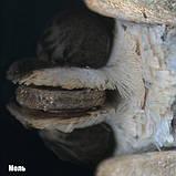 Микроскоп National Geographic Stereo 20x, фото 6