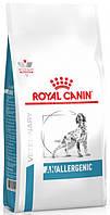 Лечебный сухой корм Royal Canin Anallergenic Canine для собак c пищевой аллергией  (3 кг)