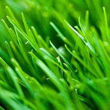 Газонная трава и Сидераты и Травы