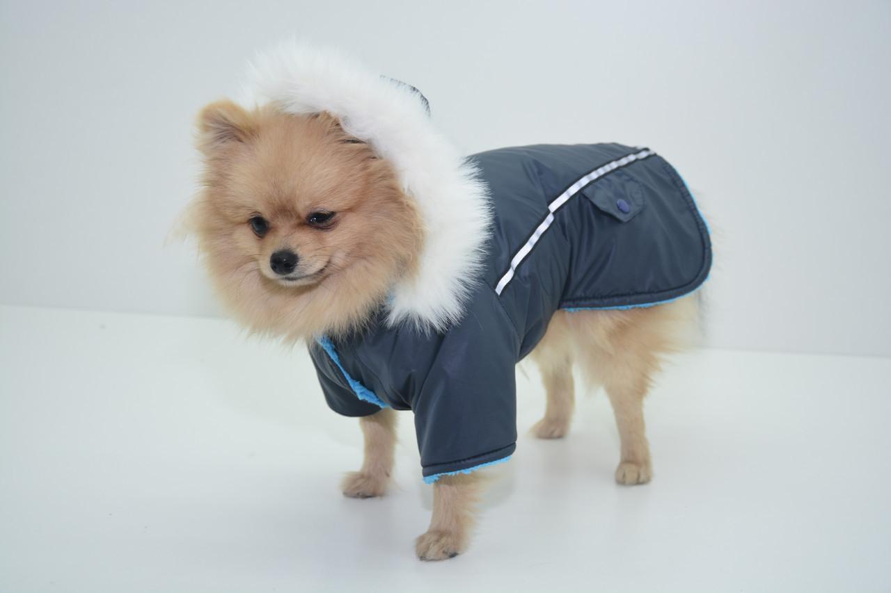Куртка, пончо,попона  для собаки Осень 28*60 мопс