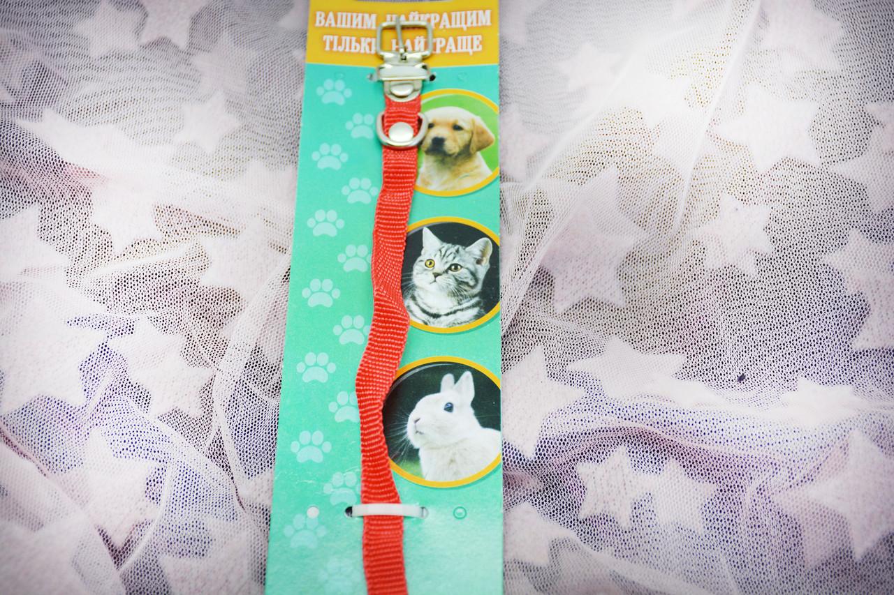 Ошейник для собак и кошек из капрона 1,0