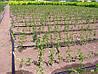 Капельная трубка Evci Plastik 2L  с шагом 33 см от одного метра, фото 8