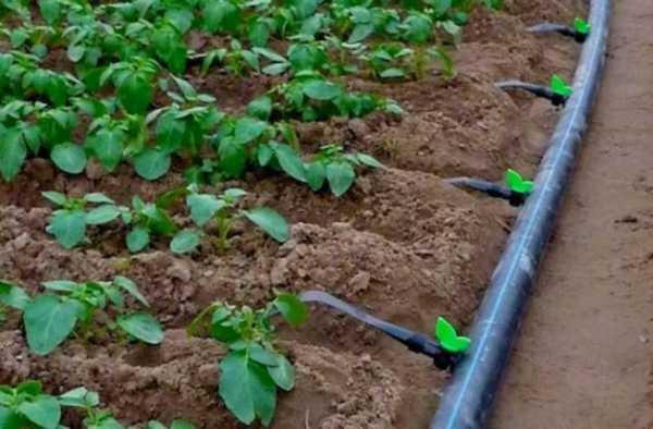 Капельная лента для полива огорода