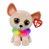 М'яка іграшка TY Beanie boos Чихуахуа Чеві (36324)