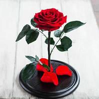 Роза в колбі з LED підсвічуванням Маленька - Червона, фото 1