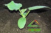 Чернозем, грунт растительный от 10т