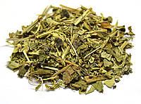 Огуречная трава (Огуречник, Бурачник)