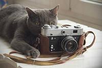 """Открытка """"Фотоаппарат"""", фото 1"""