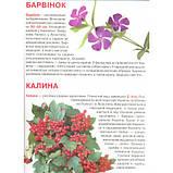 Велика книжка Рослинний світ України, фото 2
