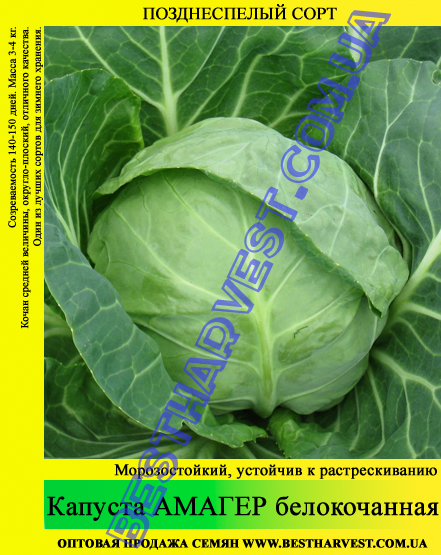 Семена капусты Амагер 10 кг (мешок)