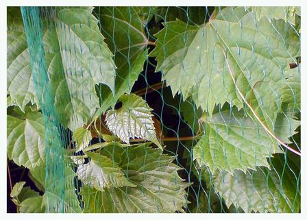 Сетка защитная от птиц, BIRD NET, 7g / м2, 19х19мм, 5х10м, AS-BN71919510 BRADAS POLAND, фото 2