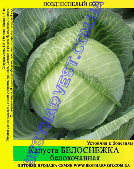 Семена капусты Белоснежка 10 кг (мешок)