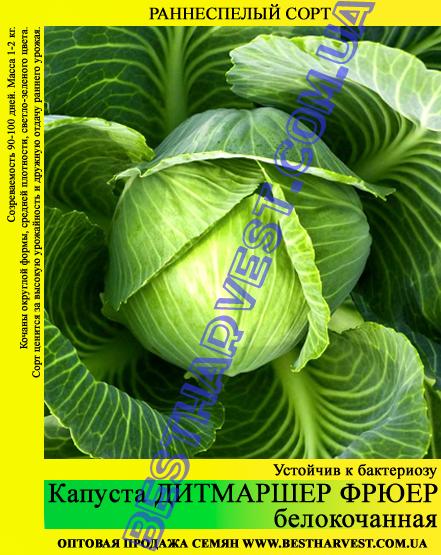 Семена капусты Дитмаршер Фрюер 0,5кг, белокочанная