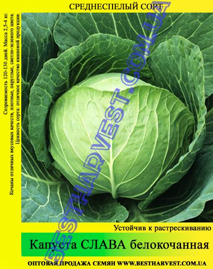 Семена капусты Слава 0,5кг, белокочанная
