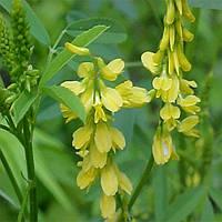 Биркун жовтий (10кг) Садиба Центр