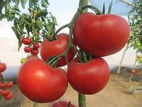Томат ДИАГРАММА (NUN03559) F1 - Nunhems (Bayer CropScience), уп. 500 семян (индетерминантный)