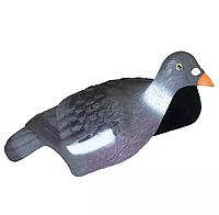 Чучело голубя вяхиря (ракушка)
