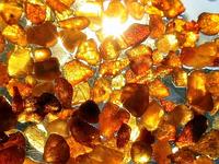 Уникальный антиоксидант — янтарная кислота