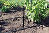 Крапельниця садова Presto-PS регульована 0-70 л/год, в упаковці - 10 шт. (AOD-0170), фото 9
