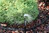 Крапельниця для поливу Presto-PS микроджет Колібрі, в упаковці - 10 шт. (MS-8060), фото 4