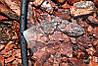 Микроджет Presto-PS капельница для полива Крокус 43 л/ч 90°, в упаковке - 10 шт. (7717), фото 3
