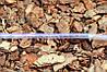 Шланг пвх пищевой Presto-PS Сrystal Tube диаметр 22 мм, длина 50 м (PVH 22 PS), фото 4