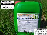 Стимулятор роста на Пшеницу Ячмень Реаком Плюс Амино. Снятие стресса с растения 0,5-1,0 л/га L-Аминокислотами., фото 2