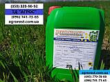 Стимулятор роста на Пшеницу Ячмень Реаком Плюс Амино. Снятие стресса с растения 0,5-1,0 л/га L-Аминокислотами., фото 5