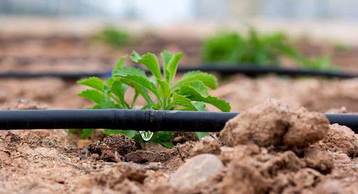 система капельного полива, как рассчитать капельный полив для растений