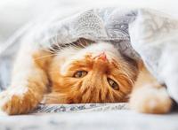 Корм для кошек и котят