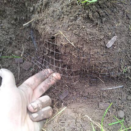 """Сетка от кротов, для газона Tenax """"Авиари"""" 200х2 м, фото 2"""
