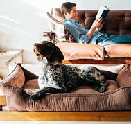 Аксессуары для собак и кошек