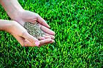 Как правильно посеять газон?