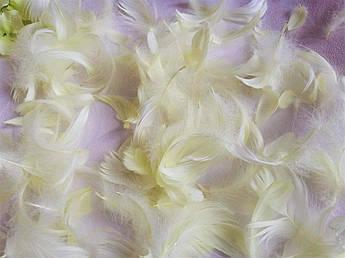 Пасхальный декор, перо нежно-лимонное