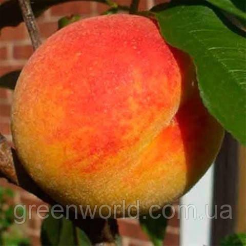Саженцы канадского персика Т-3 Вайн Голд