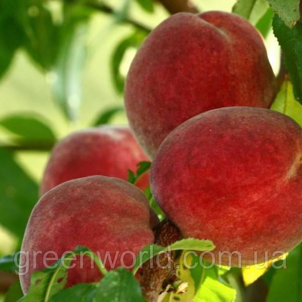 Саженцы канадского персика Флеминг Фьюри