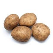 Картопля ваг.