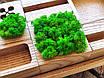 Органайзер для канцтоваров с мохом, фото 2