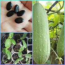 Семена Люффы