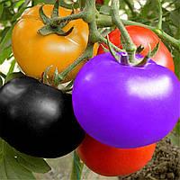Семена помидоров для сада! Семена  томатов! Упаковка 100 шт.