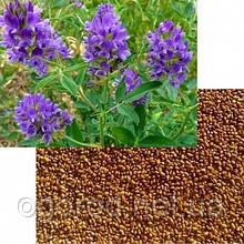 Люцерна семена 200 грамм