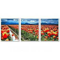 Картина по номерам Поля тюльпанов, 50x150 см., Babylon