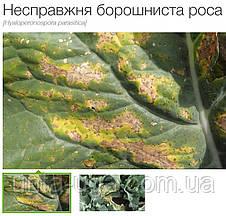 Акробат МЦ фунгицид безопасный для пчёл, фото 3