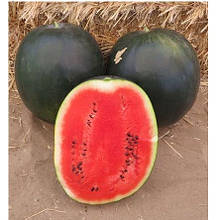 Семена арбуза INX 1748 F1 (1000 сем.) Innova Seeds